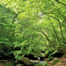 【震災から4年】 東北で見た美しい森