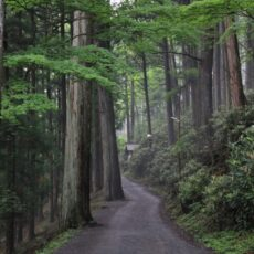 三峯神社で体験した不思議なこと(2)御眷属が祀られている御仮屋で